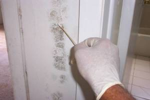 Mold Remediation Palatine IL