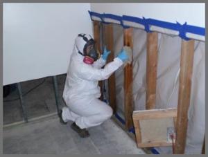 Mold Remediation Schaumburg IL