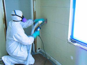 Mold Removal Palatine IL