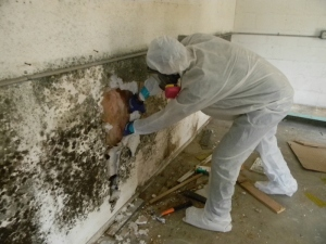 Toxic Black Mold Remediation